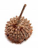stock photo of acorn  - Acorn hat isolated on white background - JPG