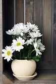 foto of wooden crate  - Beautiful chrysanthemum in pot in wooden crate - JPG