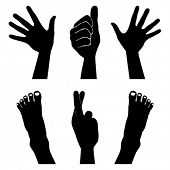 Hands and feet silhouettes vector.