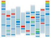 stock photo of electrophoresis  - Illustration of a human dna ideal for scholl information on a clear background - JPG