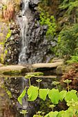 Waterfall garden, shallow dof, focus on the front leaves.