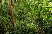 Floresta tropical jungle