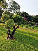 Beautifully manicured park garden.