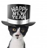 Funny kitten wearing a happy new year hat.
