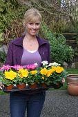 Lächelnd Gärtner mit Primeln bereit, gepflanzt werden. Auch erhältlich in horizontalen.