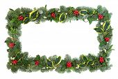 Winter and Christmas background border with flora of holly, snow covered spruce fir, ivy, mistletoe  poster