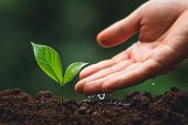 Young Tree Tree Planting Tree Care Watering A Tree In Nature poster