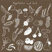 set - hand draw vegetables
