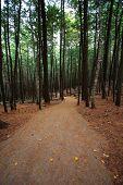 Walking Hiking Trail Through the Woods