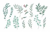 Bundle Of Elegant Detailed Drawings Of Various Eucalyptus Branches With Green Leaves. Set Of Hand Dr poster