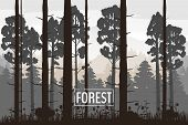 Forest Landscape Minimalistic Illustration. Pines Trees Silhouettes. Nature Scene. Realistic Color B poster