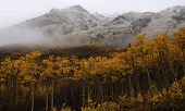 Fall Colours With Mountain And Snow, Yukon Territory, Canada