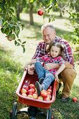 Grandfather With Granddaughter With Apple In The Apple Orchard. Healthy Childhood, Vacations In The poster