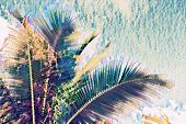 Coco Palm Tree Crown On Sky Background. Palm Leaf On Sunset Sky. Tropical Vacation Faded Digital Ill poster