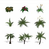 Set Of Plants In Isometric Style. Cartoon Tropical Tree And Fern On White Background. Isolated Image poster