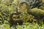 Incredibly Detailed Plant Sculptures Of All Sorts Of Animals In Natural Park, Small Animals, Big Bir poster