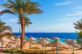 Sunny Resort Beach With Palm Tree At The Coast Shore Of Red Sea In Sharm El Sheikh, Sinai, Egypt, As poster