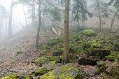Forest Haze