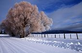 Winter Rural Scene