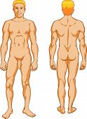 stock photo of pubic  - Vector educational illustration of a handsome male nude - JPG