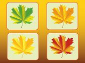 Set of of autumn maple leaves