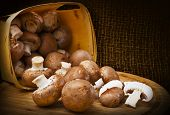 Champignon Mushrooms With Brown Variety