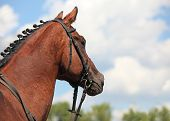 Beautiful horse under a blue sky