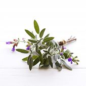 pic of purple sage  - Sage herb with purple flowers tied in a bundle - JPG