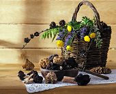 stock photo of morel mushroom  - wild mushrooms with flowers in a basket - JPG