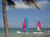 Sailboats In The Water