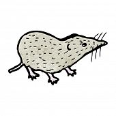 stock photo of shrew  - shrew illustration - JPG