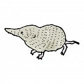 image of shrew  - shrew illustration - JPG