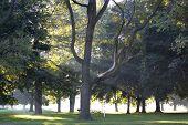 Tree Rays