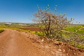 image of golan-heights  - Dirt Road between the Fields in Golan Heights Early Spring - JPG