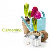 Fresh Hyacinth flower bulb in pot and garden tools over white (with easy removable sample text)