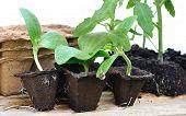 Various Seedlings