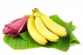 stock photo of bunch bananas  - Fresh banana fruits with a banana blossom on banana leaves - JPG