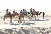 Tourists rideing camels, Sahara
