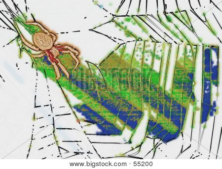 Picture or Photo of Stylised illustration of a spider in it
