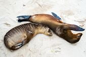 Sea lions sleeping on a beach