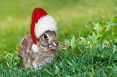 Christmas cottontail bunny