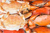pic of cooked blue crab  - Hot Steamed crab and a red color