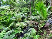Native New Zealand Bushland