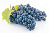 Bunch Of Fresh Blue Grapes Isolated On White