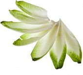endive chicory leaves isolated on a white background