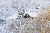 Winter Scenery. Wooden House Trees Covered With Snow. Christmas.