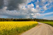 Country Road And Rapeseed Field