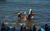People Clean Seafood On Beach