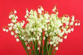 Beautiful lilies of the valley on red background