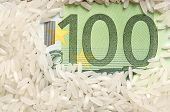 Rice grains on bank note